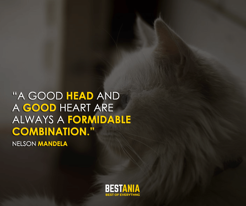 A good head and a good heart are always a formidable combination. Nelson Mandela