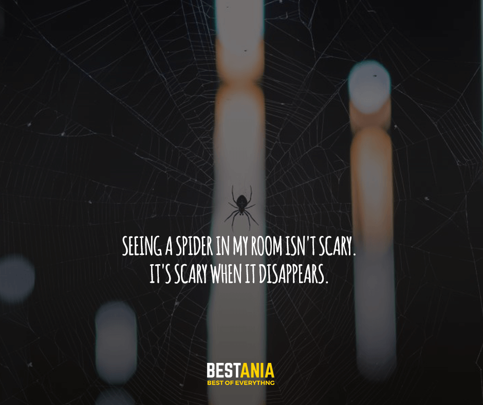 Seeing a spider in my room isn't scary. It's scary when it disappears.