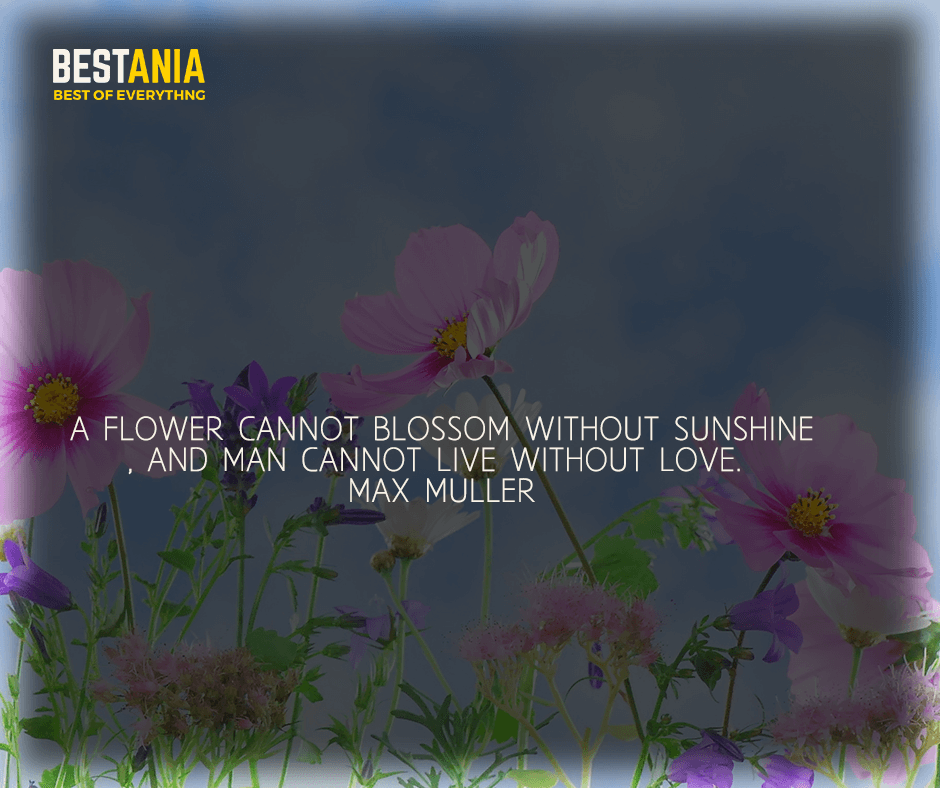 """""""A flower cannot blossom without sunshine, and man cannot live without love"""" Max Muller"""
