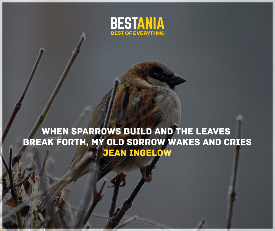 """When sparrows build and the leaves break forth, My old sorrow wakes and cries."" Jean Ingelow"