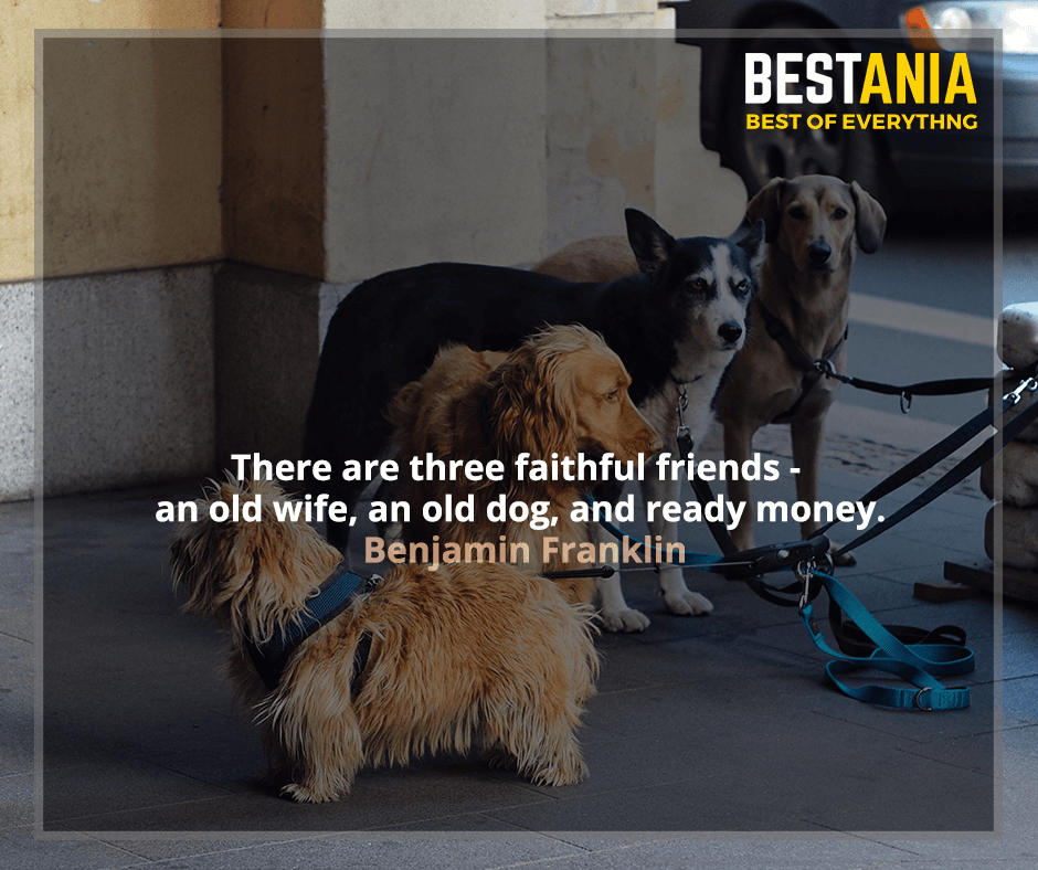 There are three faithful friends - an old wife, an old dog, and ready money. Benjamin Franklin