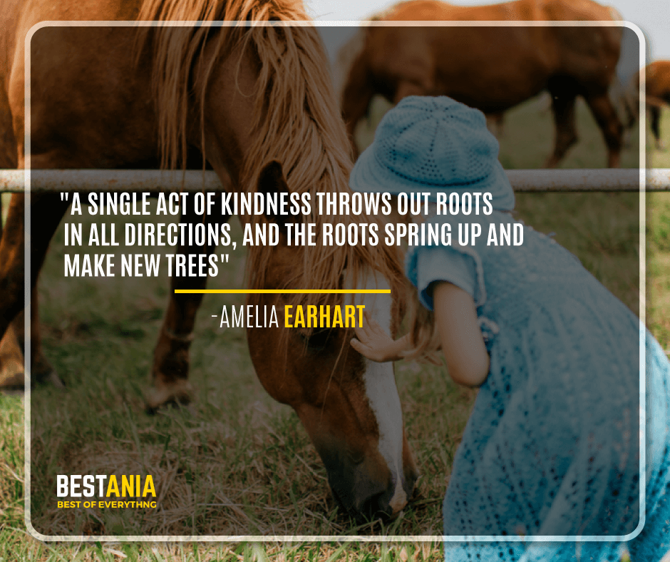"""A SINGLE ACT OF KINDNESS THROWS OUT ROOTS IN ALL DIRECTIONS, AND THE ROOTS SPRING UP AND MAKE NEW TREES.""  -AMELIA EARHART"