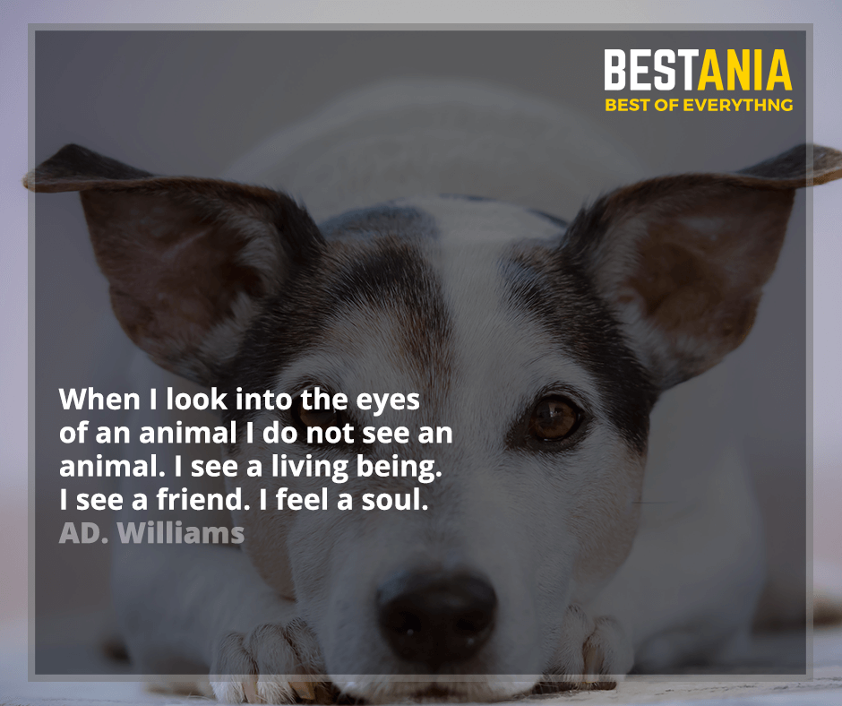 When I look into the eyes of an animal I do not see an animal. I see a living being. I see a friend. I feel a soul. AD. Williams