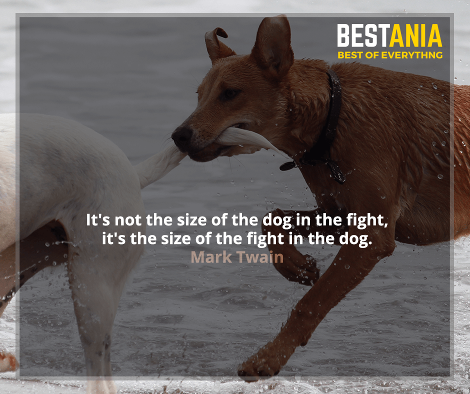 It's not the size of the dog in the fight, it's the size of the fight in the dog. Mark Twain