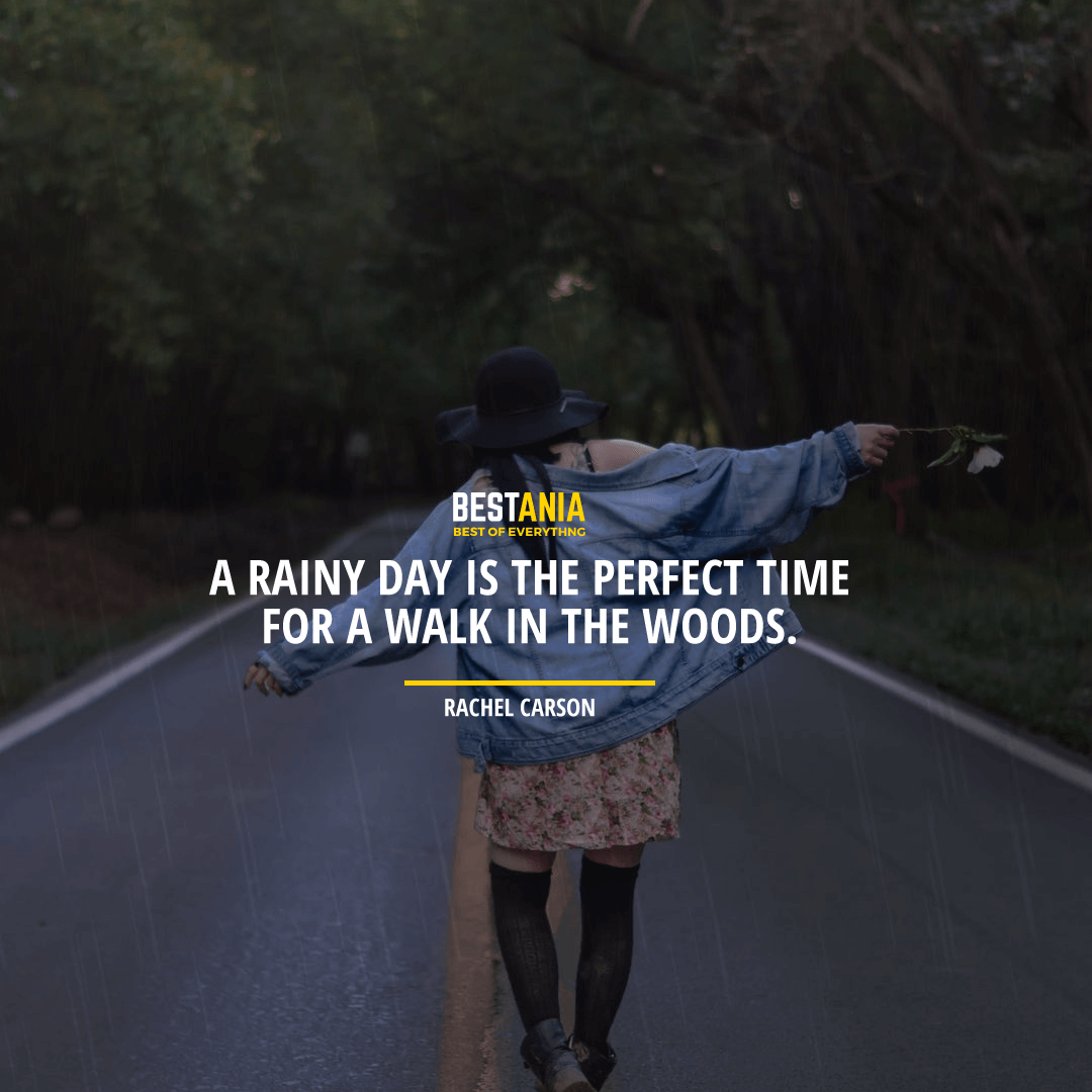 """A RAINY DAY IS A PERFECT TIME FOR A WALK IN THE WOODS.""  RACHEL CARSON"
