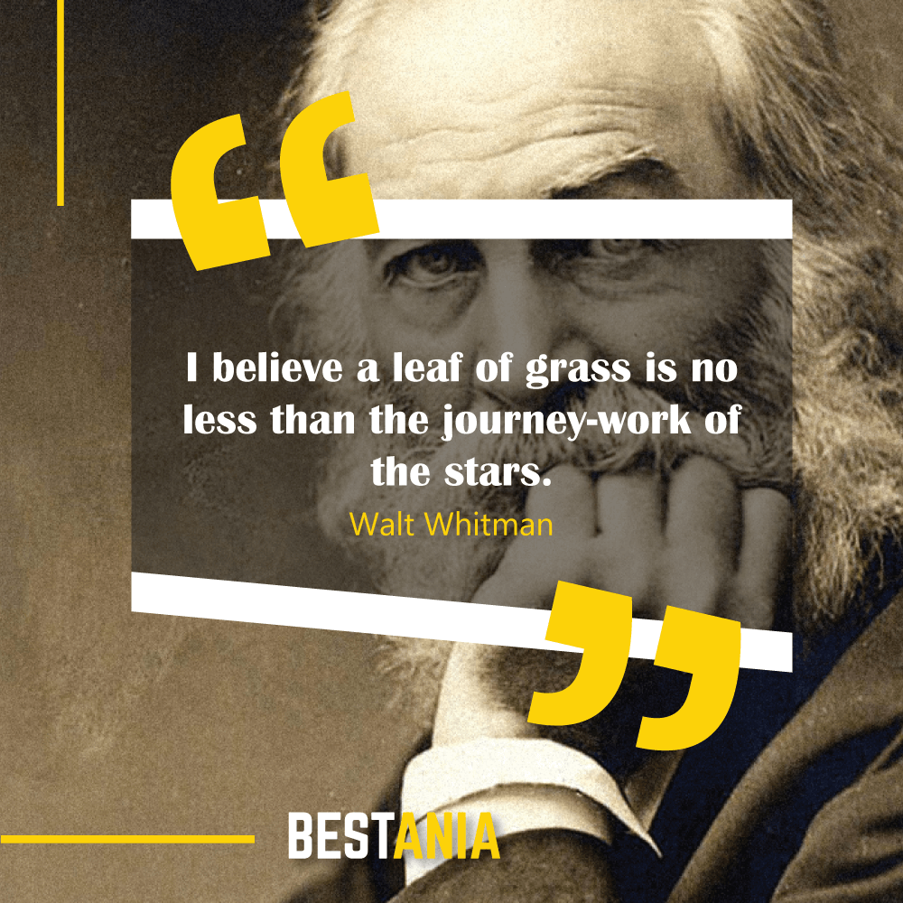 I believe a leaf of grass is no less than the journey-work of the stars. Walt Whitman